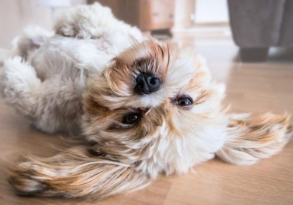 Mudanza con mascotas: trucos para que lleven mejor el traslado a su nuevo hogar