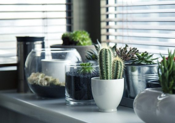 5 tips para hacer una mudanza con plantas y que lleguen sanas y salvas